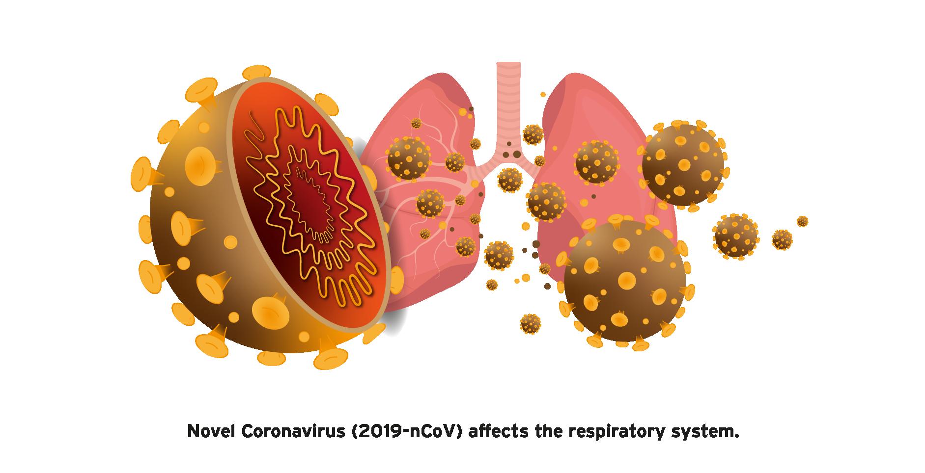 altona Diagnostics is developing a RT-PCR kit for detection of novel  coronavirus (2019-nCoV) - Altona-Diagnostics EN